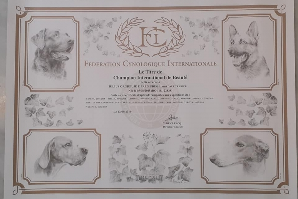airedale terrier iulius terriers eukanuba