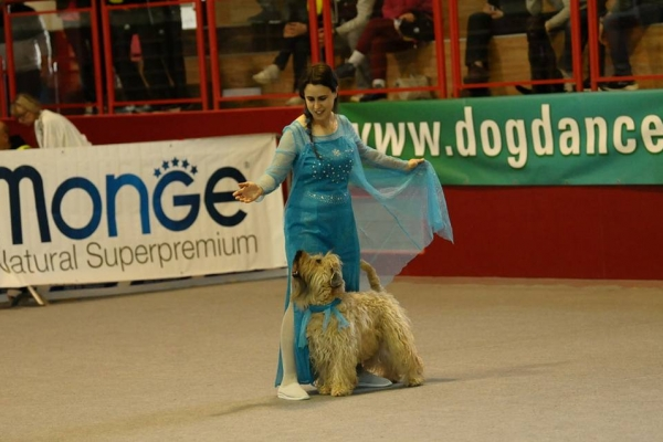 agility irish soft coated wheaten terrier