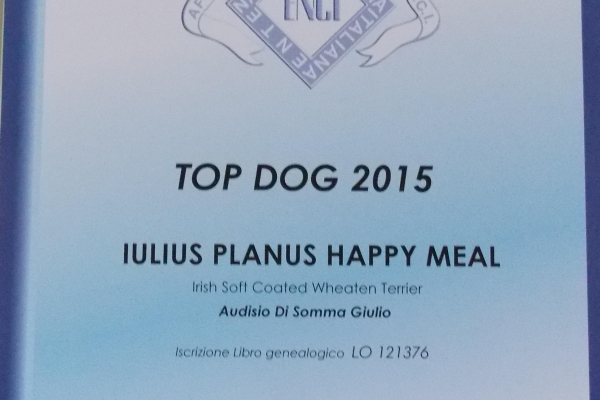 top-dog-20153AA6AA37-530F-1CA4-61D5-B4C6ABF0435B.jpg