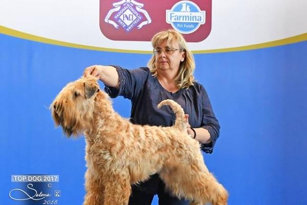 matilda-top-dog-201799FD0F48-F4E3-E2E0-A58A-C260C6B4C7E8.jpg