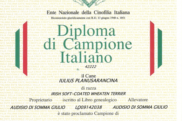anita-italiano096C539B-438D-BFF3-677E-4837AE1922D0.jpg